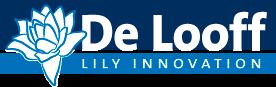 De Looff Lily Innovation